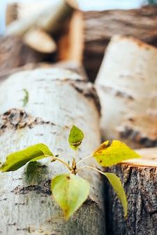 Grünblätter auf einem gefällten baum auf einem keil, naturschutz