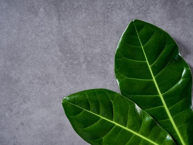 Grünblätter auf grauem marmorhintergrund
