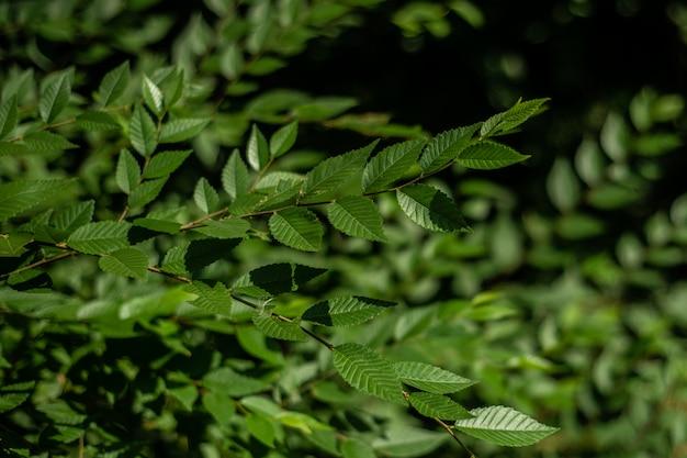 Grünblätter auf niederlassungen für gebrauch als beschaffenheit