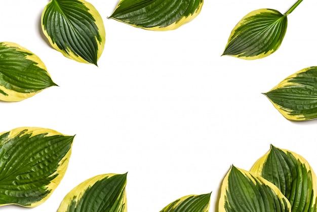 Grünblätter getrennt auf weiß