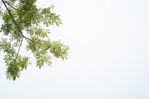 Grünblätter im frühjahr