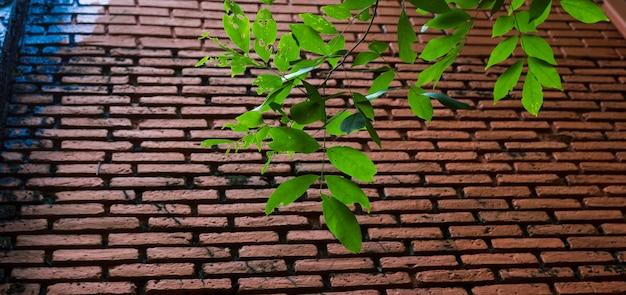 Grünblätter mit brauner backsteinmauer im panorama
