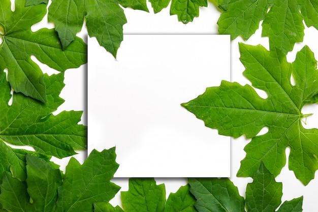 Grünblätter mit unbelegter karte