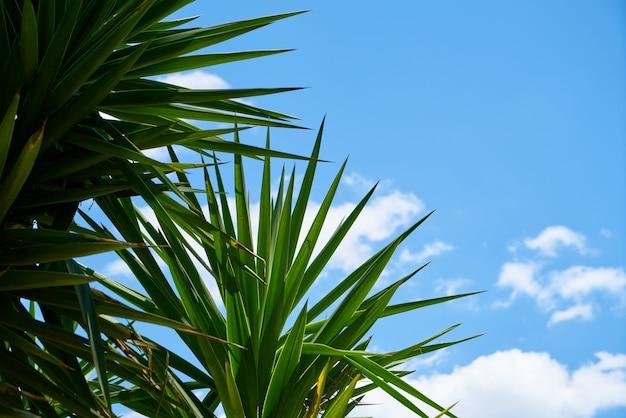 Grünblätter und blauer himmel