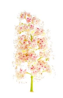 Grünblätter und kastanienbaumblütenstand lokalisiert auf weiß.