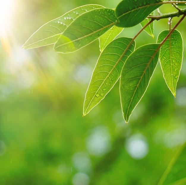 Grünblätter und -niederlassungen in der natur im sommer
