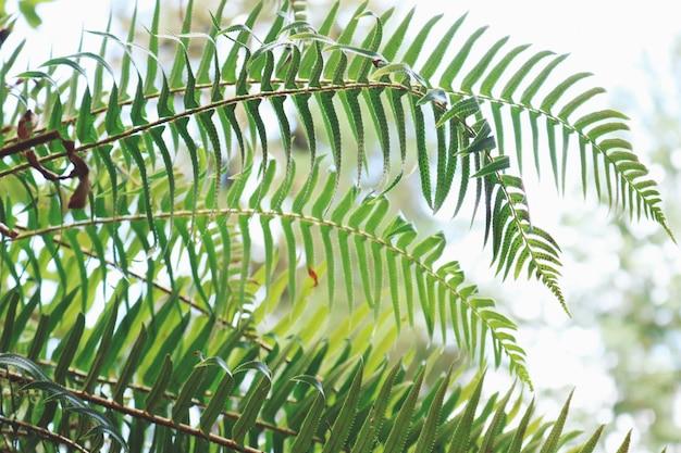 Grünblättrige pflanze