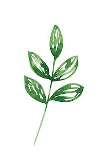 Grüne abstrakte blattclipart isoliert auf weißem hintergrund aquarell botanische illustration