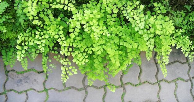 Grüne adlerfarnblätter
