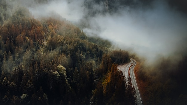 Grüne bäume am berg während des tages