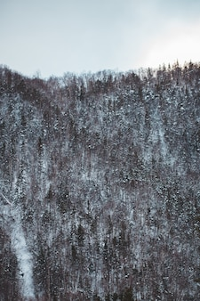 Grüne bäume auf schneebedecktem feld