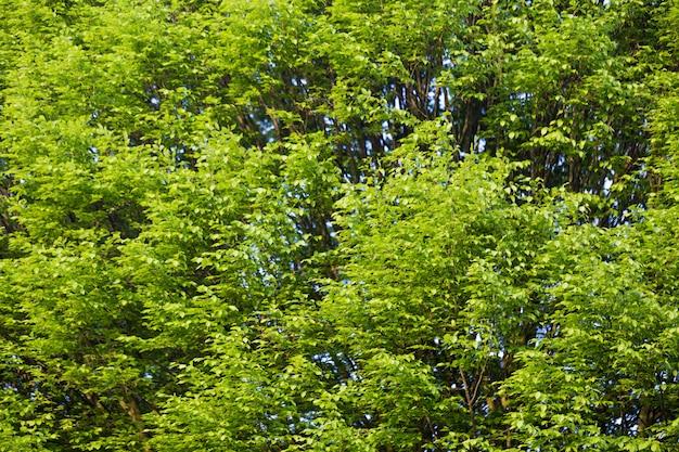 Grüne bäume hintergrund