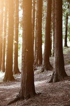 Grüne bäume im herbst im berg in der natur