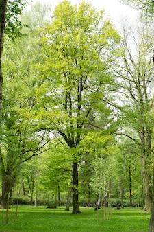 Grüne bäume im park. schöner natürlicher frühlingshintergrund