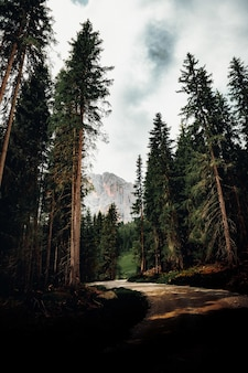 Grüne bäume nahe berg unter bewölktem himmel während des tages