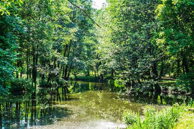 Grüne bäume, teich und gehweg im summer city park.