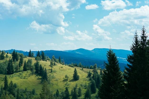 Grüne bäume über dem berg