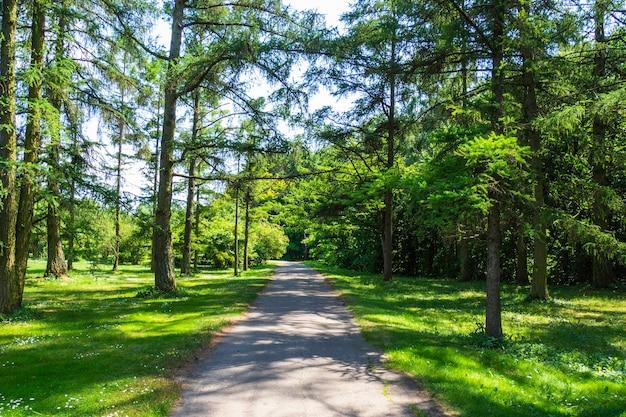 Grüne bäume und gehweg im stadtpark im sommer.