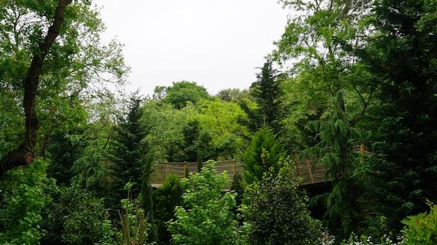 Grüne bäume und vegetation im schönen wald