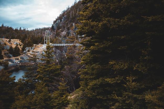 Grüne bäume unter weißen wolken und blauem himmel während des tages