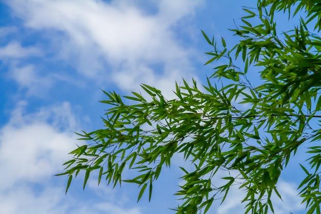Grüne bambusblätter haben einen schönen blauen himmel als hintergrund.