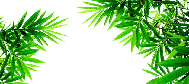 Grüne bambusblätter lokalisiert auf weißem hintergrund