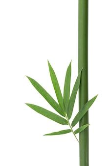 Grüne bambusblätter und -holz lokalisiert auf weißem hintergrund mit beschneidungspfad.