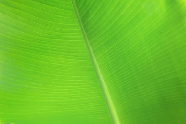Grüne bananenblatt-hintergrundzusammenfassung