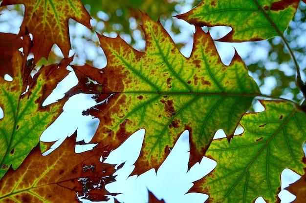 Grüne baumblätter