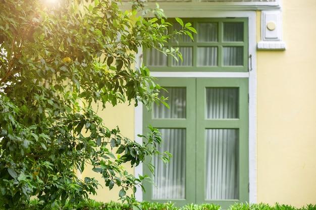 Grüne baumpflanze zu hause fenster im freien für sonnenschutz frisches ozon-luftkühlhaus und energiekosten sparen gutes leben mit der natur.