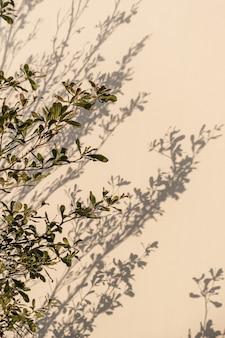 Grüne baumpflanzenblätter und sonnenlichtschatten auf neutraler beige wand