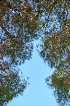 Grüne belaubte bäume und himmelhintergrund