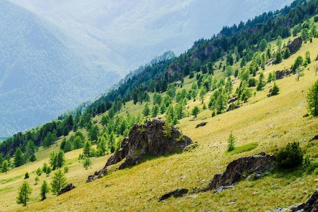 Grüne berglandschaft mit lebendigem grünem berghang mit nadelwald und klippen.