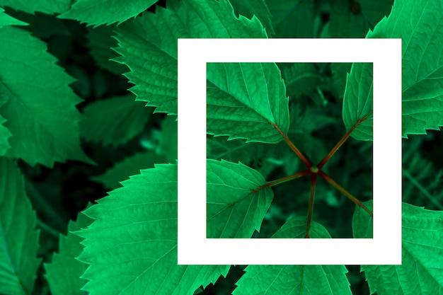 Grüne blätter als hintergrund und ein weißes blatt papier für das etikett.