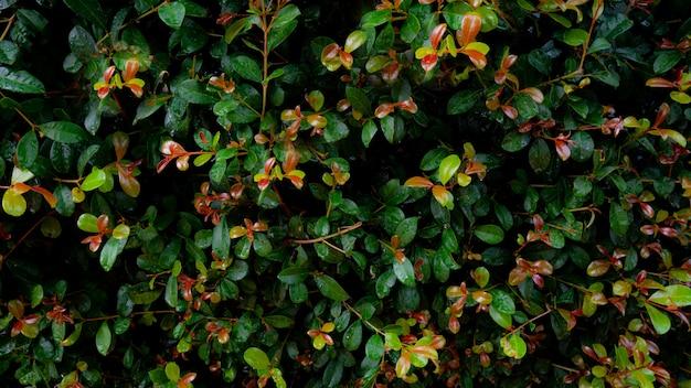 Grüne blätter am busch