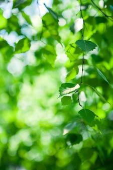Grüne blätter auf baum schließen oben