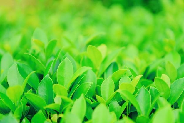 Grüne blätter auf dem boden in einem garten