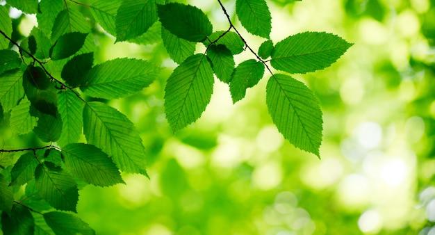 Grüne blätter auf den grünen hintergründen
