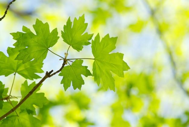 Grüne blätter auf einem ast
