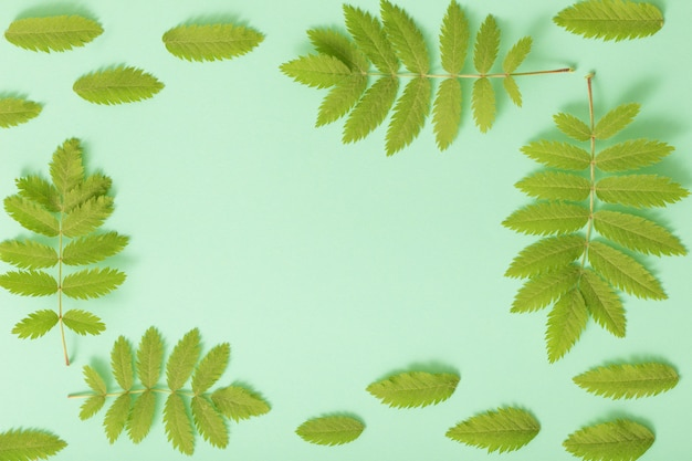 Grüne blätter auf papierhintergrund