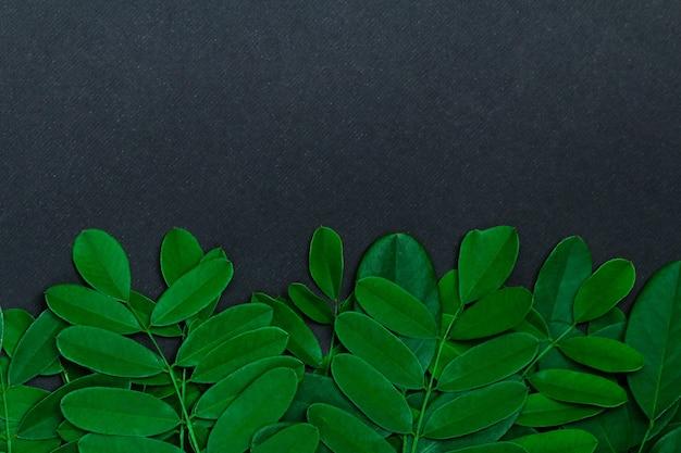 Grüne blätter auf schwarzem hintergrund mit kopienraum.