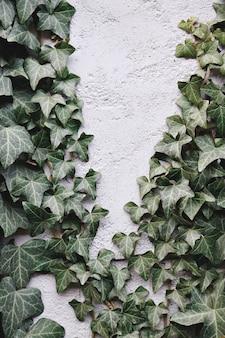 Grüne blätter auf weißer betonwand