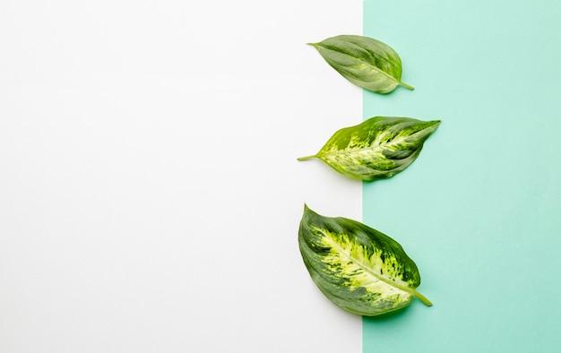 Grüne blätter der draufsicht mit kopierraum