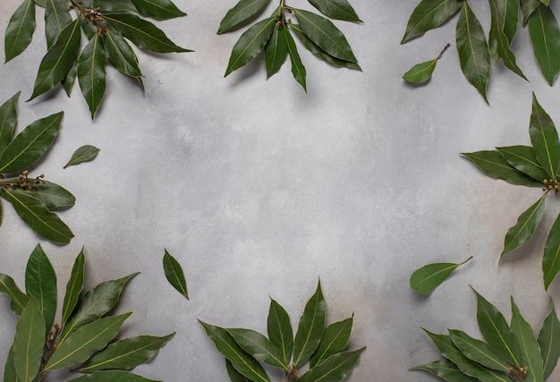 Grüne blätter der grauen betonoberfläche des lorbeerlebensmittelrahmens