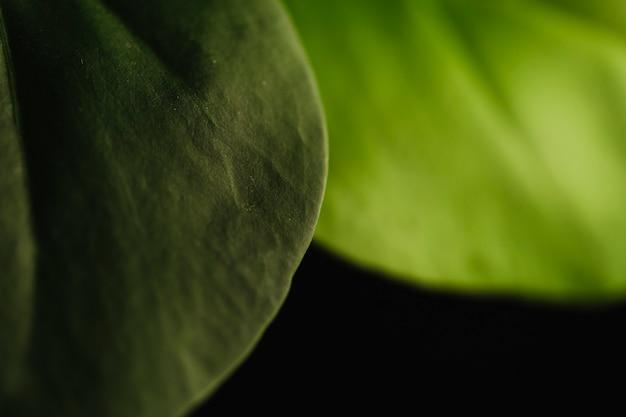 Grüne blätter der nahaufnahme