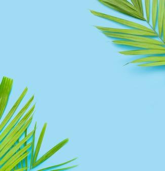Grüne blätter der palme auf blauem hintergrund.