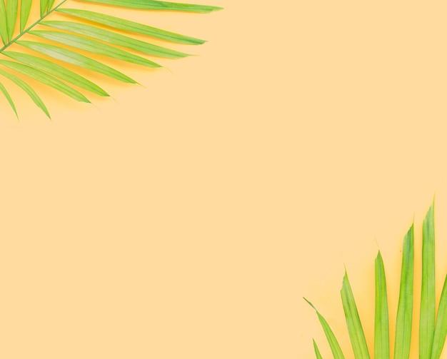 Grüne blätter der palme auf gelbem hintergrund.