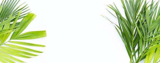 Grüne blätter der palme auf weißem hintergrund.