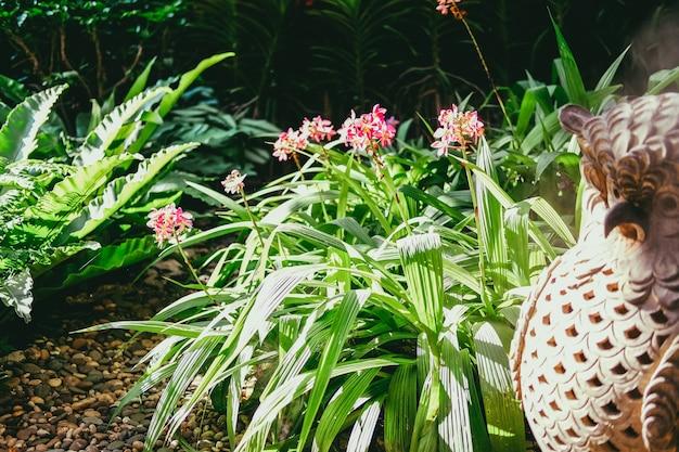 Grüne blätter der rosa orchideenblume, die im garten dekoriert