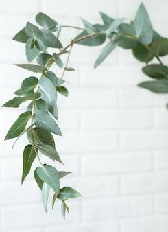 Grüne blätter eukalyptus auf weißer backsteinoberfläche.